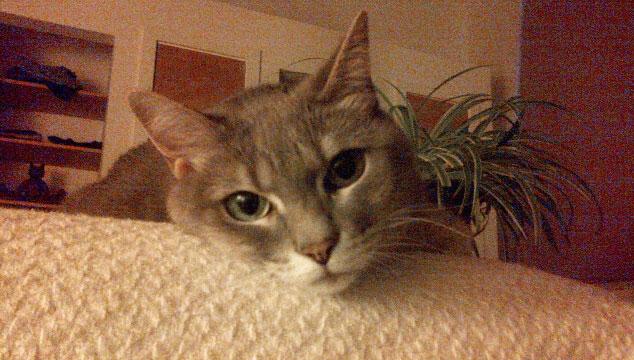 cat-sitting-service-2